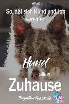 Hund und Job unter einen Hut zu bringen ist immer schwierig. Wie erzählen, wie es bei uns im Alltag klappt und die Hunde trotzdem entspannt und ausgelastet sind. #hund #hundeverhalten #hundeerziehung | Hund und Beruf | Alltag mit Hund | thepellmellpack.de