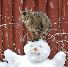 viva winter‼︎