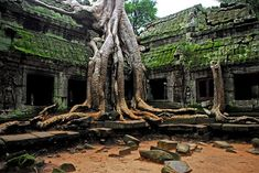 You don't know where to visit at Angkor Wat? The below places are top places to see at Angkor Wat. Angkor Wat, Angkor Vat, Angkor Temple, Buddhist Temple, Temple Ruins, Hindu Temple, Places Around The World, The Places Youll Go, Amazing Nature
