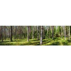 Green Summer Forest