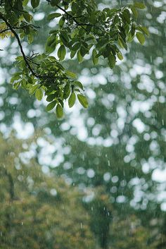 157/365 The Rain by M. Klasan on Flickr.