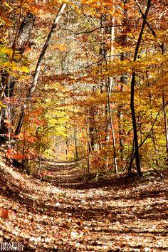 Sunday Snapshots: Fall Color Change {Beard and Bonnet}