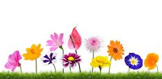 Colorful Flowers Growing in Grass Isolated on White