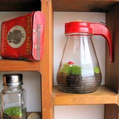 A tiny terrarium is right at home in an old syrup dispenser - and it looks great on the shelf, too!
