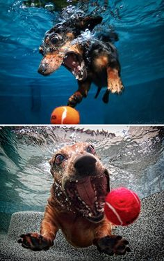 underwater dogs ♥ seth casteel