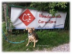 Chris-Tas-Blog: Highlight of the week 35 - Störche und Hundeschule | Chris-Ta´s Blog