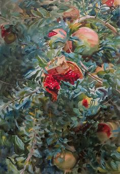John Singer Sargent, Watercolors from the Exhibition at the MFA, Boston, MA. 'Pomegranates,' 1908. Opaque and translucent watercolor with graphite underdrawing. Special subscription, Brooklyn Museum.