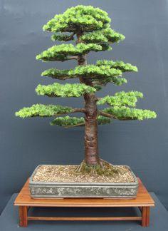 Cedar of Labanon (Cedrus libani) Height: 96 cm, 37.80 inches Pot: John Pitt (UK) Categories: Best Overall Bonsai and Best European Bonsai. Artist: John Pitt