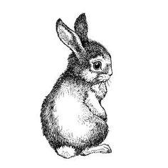 Little bunny rabbit illustration Lapin Art, Rabbit Art, Bunny Rabbit, Small Rabbit, Motifs Animal, Bunny Art, Easter Printables, Tatty Teddy, Vintage Easter