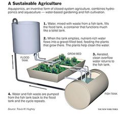 a sustainable agriculture