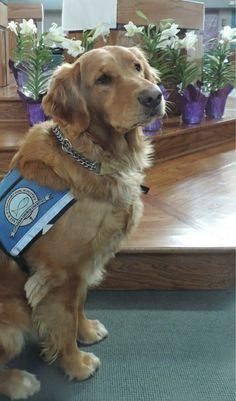 Bekah Comfort Dog - (Facebook via LCC K-9 Comfort Dogs)