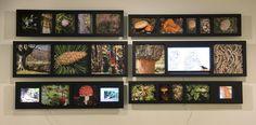 Todos los recursos naturales que genera el bosque están representados en la exposición El Bosque Quemado, en el Museo de la Evolución Humana, en Burgos