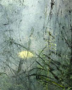 Wild Garden -by Kath Williamson