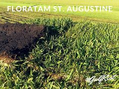 Visit us today and pick up beautiful Floratam St. Augustine for your #home. #GulfKist