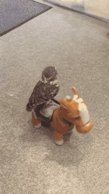 """I will ride this steed into battle. Dammit, he's stopped again. Get your shit together man!"""