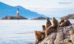Navegación por el Canal Beagle - Piratour Ushuaia, Beagle, Patagonia, Enjoy It, Animals, Argentina, Pictures, Turismo, Bicycle Kick