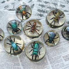 DIY Faux Bugs In Resin