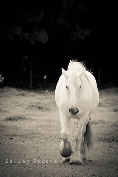 www.pegasebuzz.com | Equestrian photography : Kelley Dakota