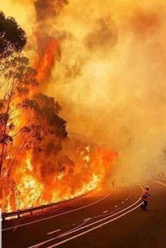 """""""oaktreesandhuneysuckle: """"awesome-picz: """" Pics That Sum Up The Hell On Earth That Is Taking Place In Australia. Help Thirsty Koalas Devastated by Recent Fires. Apocalypse, Bushfires In Australia, Australian Bush, Wild Fire, Volunteer Firefighter, Blue Mountain, Natural Disasters, Landscape Photography, Night Photography"""
