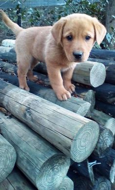 Trying to get down the logs