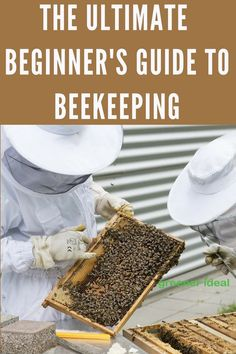 The ultimate guide to beekeeping for beginners. Learn how to keep and save the bees right from your own backyard!