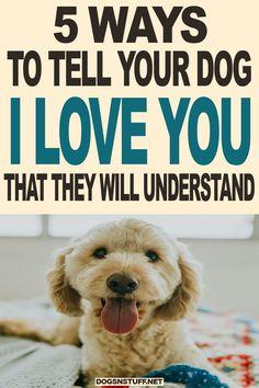 Dog Training Techniques, Dog Training Videos, Training Your Dog, Dog Minding, Dog Facts, Dog Care Tips, Pet Care, Family Dogs, Dog Behavior