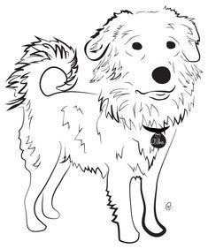 Maremma Sheepdog & Golden Retriever -- Charity Pups raises awareness and dollars for a different animal-related non-profit each month through dog illustrations. www.charitypups.com #dog #illustration #cute #adorable #puppy #maremma #goldenretriever #maremmagoldenretriever
