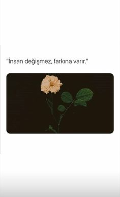 Book Quotes, Instagram Story, Writing, Words, Istanbul, True Words, Being A Writer, Horse