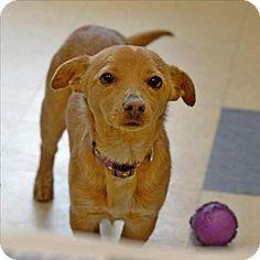 Santa Rosa fl animal rescue - Home | Facebook