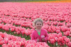 Tulip Festival Skagit County WA.