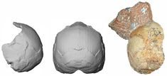 Year Old Homo sapiens Skull From Greece is Oldest Outside Africa Hominid Species, Human Fossils, Nature Paper, Homo, Early Humans, Human Evolution, Plate Tectonics, Human Skull, Prehistory
