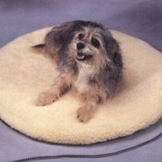 Allied Precision ALLIEDPR12PBR Round Heated cat Bed ** Check out this great image  : Cat Beds and Furniture