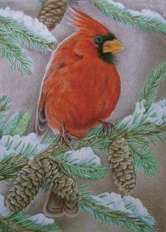 Рисунок цветными карандашами. «Красный кардинал» Фотобумага А4, цветные карандаши MARCO Raffine.