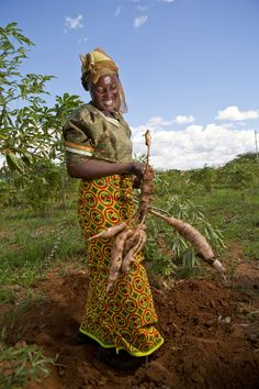 woman farmer growing cassava in Africa (2010) | Gates Foundation via MSU and GR2Food Archive