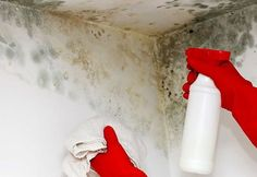 4 Neat Clever Hacks: Carpet Cleaning Hydrogen Peroxide Baking Soda deep carpet cleaning to get.Deep Carpet Cleaning To Get carpet cleaning tricks baking soda.Deep Carpet Cleaning To Get. Cleaning Mold, Deep Carpet Cleaning, Deep Cleaning Tips, House Cleaning Tips, How To Clean Carpet, Spring Cleaning, Cleaning Solutions, Cleaning Hacks, Cleaning Quotes