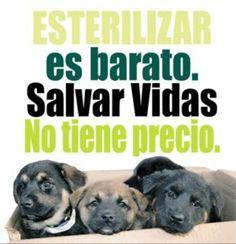 Beneficios de la esterilización para las mascotas y sus dueños Happy Animals, Animal Welfare, Pet Health, Best Friends, Shower, Twitter, Inspiration, Fashion, Adopt A Dog