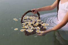 Flowers in water @lxught