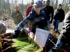 Catawba students help preserve Piedmont longleaf pine #Conservancy #Nature