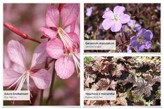 """Gemeinsam mit dem Magazin """"Lust auf Natur"""" haben wir dieses Beet entwickelt: Terrassenflächen schön zu umpflanzen ist manchmal gar nicht so… Clematis, Wisteria Sinensis, Heuchera, Geraniums, Beets, Plants, Patio, Astrantia, Climbing Roses"""