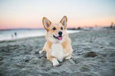 Most Popular Dog Breeds - American Kennel Club Top Dog Breeds