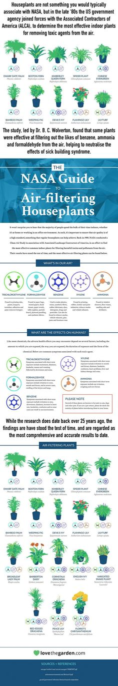NASA Reveals A List Of The Best Air-Cleaning Plants For Your Home - 9GAG