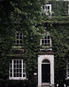 Ivy façade // Norwich, Norfolk, eastern England   sillmarilli, via Instagram