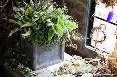 ホスタ'ファイヤーアンドアイス'の日陰で楽しめる寄せ植え | フローラのガーデニング・園芸作業日記