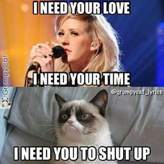 Grumpy cat quotes, funny grumpy cat quotes, grumpy cat jokes …For the funniest quotes and hilarious pictures visit www. Grumpy Cat Quotes, Grump Cat, Funny Grumpy Cat Memes, Funny Animal Jokes, Cat Jokes, Cute Funny Animals, Funny Cats, Angry Cat Memes, Grumpy Kitty