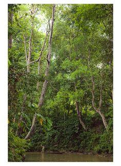 Jungles in Sarawak