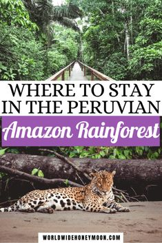 How to Choose Where to Visit in the Amazon Rainforest in Peru | Amazon Rainforest Lodge | Amazon Rainforest Peru | Peruvian Amazon Rainforest | Peru Photography Amazon Rainforest | Peru Travel Beautiful Places Amazon Rainforest | Peru Animals Animal Rainforest | Peru Nature Amazon Rainforest | Peru Forest Amazon Rainforest | Iquitos Peru | Tambopata Peru | Manu Peru | Tambopata National Reserve | Peruvian Amazon Travel Best Places To Travel, Cool Places To Visit, Places To Go, Peru Travel, Travel Usa, Travel Couple, Family Travel, Travel Inspiration, Travel Ideas