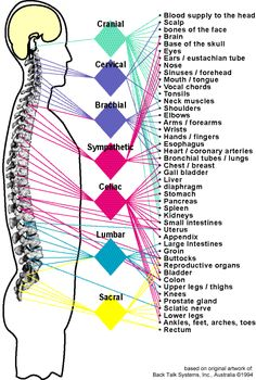 A picture of our Nerve plexus. Nerve Anatomy, Brain Anatomy, Human Body Anatomy, Medical Anatomy, Human Anatomy And Physiology, Cardiac Catheterization, Peripheral Nerve, Sciatic Nerve, Spine Health