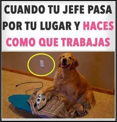 Funny Spanish Memes, Spanish Humor, Cat Memes, Funny Memes, Art Quotes Funny, Starco, Funny Posts, Animals, Ayato