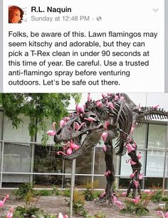 Folks, be aware of this. Lawn flamingos may seem kitschy and adorable, but they…