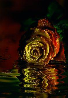 Decent Image Scraps: Animated Roses 4
